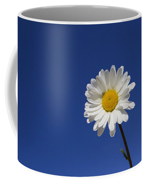 Ox-eye Daisy Coffee Mug featuring the photograph 151124p253 by Arterra Picture Library