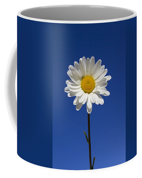 Ox-eye Daisy Coffee Mug featuring the photograph 151124p257 by Arterra Picture Library