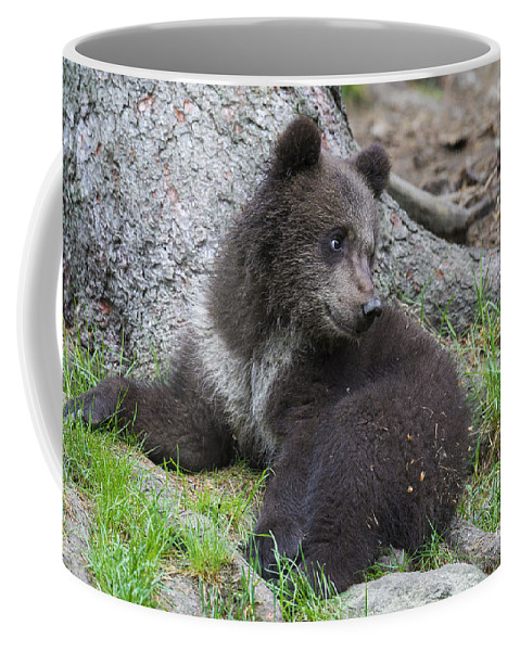 Cub Coffee Mug featuring the photograph 151207p127 by Arterra Picture Library