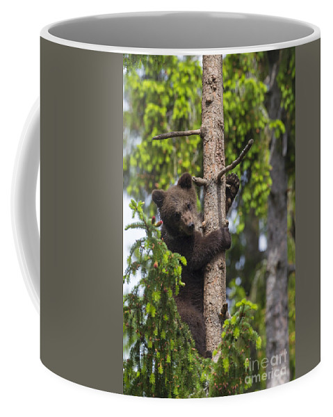 Cub Coffee Mug featuring the photograph 151207p135 by Arterra Picture Library