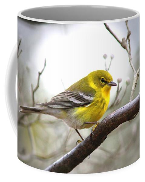 Pine Warbler Coffee Mug featuring the photograph 1570 - Pine Warbler by Travis Truelove