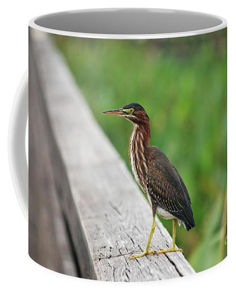 Green Heron Coffee Mug featuring the photograph 81- Green Heron by Joseph Keane