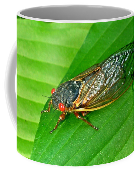 17 Coffee Mug featuring the photograph 17 Year Periodical Cicada by Douglas Barnett