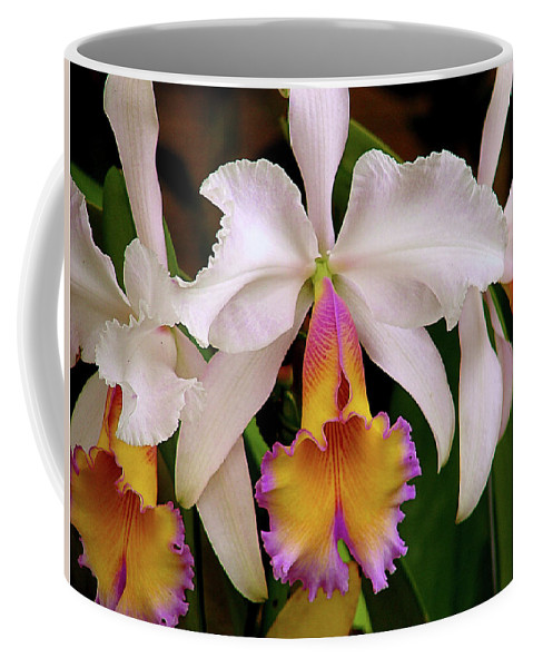 Flowers Coffee Mug featuring the photograph 180 Degrees by Blair Wainman