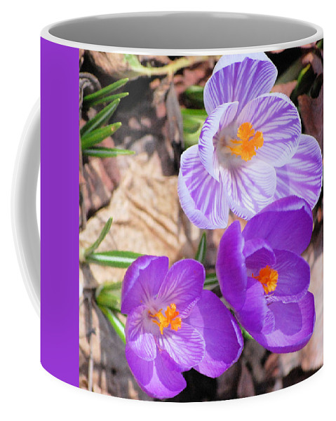 Digital Photography Coffee Mug featuring the photograph 1st Flower In Garden 2010 Photo by David Lane