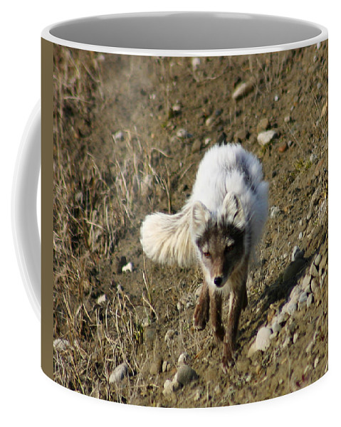 Arctic Fox Coffee Mug featuring the photograph Arctic Fox by Anthony Jones