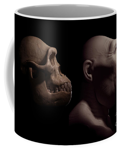 Digitally Generated Image Coffee Mug featuring the photograph Australopithecus With Skull by Science Picture Co