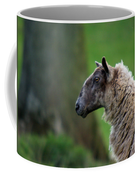 Sheep Coffee Mug featuring the photograph Baa Baa by Angel Ciesniarska