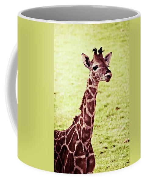 Baby Coffee Mug featuring the photograph Baby Giraffe by Jim And Emily Bush
