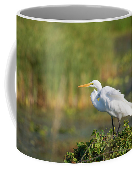 Great White Egret Coffee Mug featuring the photograph Beauty In Nature by Linda Kerkau
