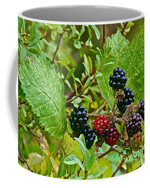 Berries In Vicente Perez Rosales National Park Near Puerto Montt Coffee Mug featuring the photograph Berries In Vicente Perez Rosales National Park Near Puerto Montt-chile by Ruth Hager