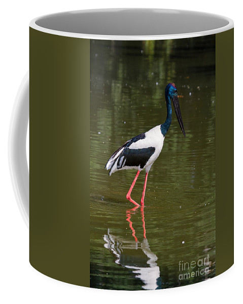 Bird Coffee Mug featuring the photograph Black-necked Stork by Louise Heusinkveld