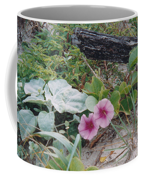 Morning Glory Flowers Beach Plants Sand Coffee Mug featuring the photograph 2 Blooms by Cindy New