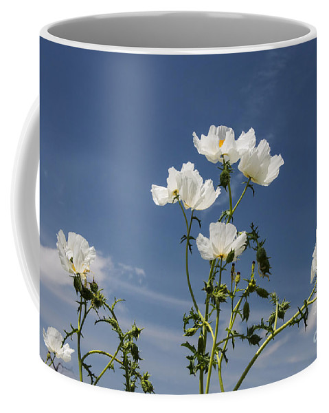 Near Fredericksburg Texas White Poppy Poppies Bloom Blooms Flower Flowers Spring Bud Buds Hill Country Coffee Mug featuring the photograph Blowing In The Wind by Bob Phillips