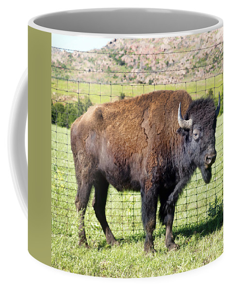 Game Coffee Mug featuring the photograph Buffalo Of Oklahoma. by W Scott McGill