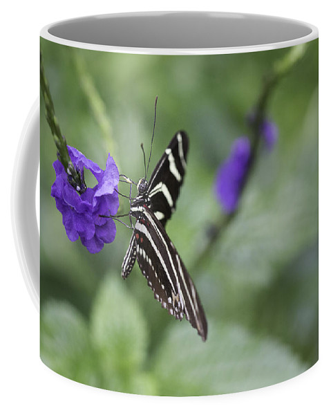 Butterfly Coffee Mug featuring the photograph Butterfly by Billy Bateman