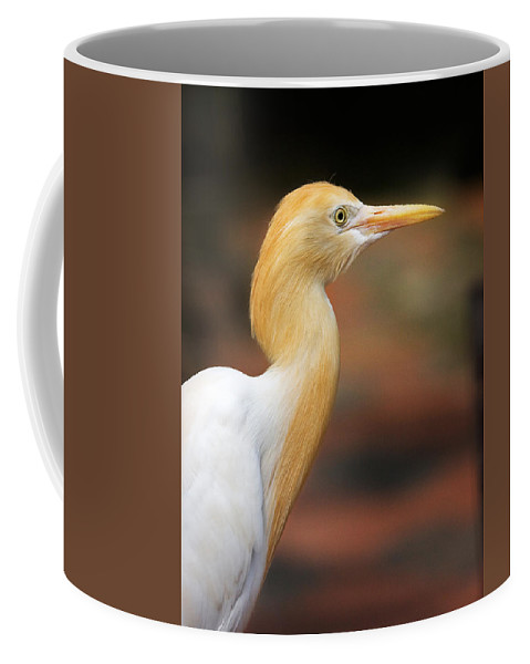 Bird Coffee Mug featuring the photograph Cattle Egret by Louise Heusinkveld