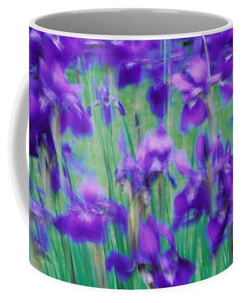 Photography Coffee Mug featuring the photograph Close-up Of Purple Flowers by Panoramic Images