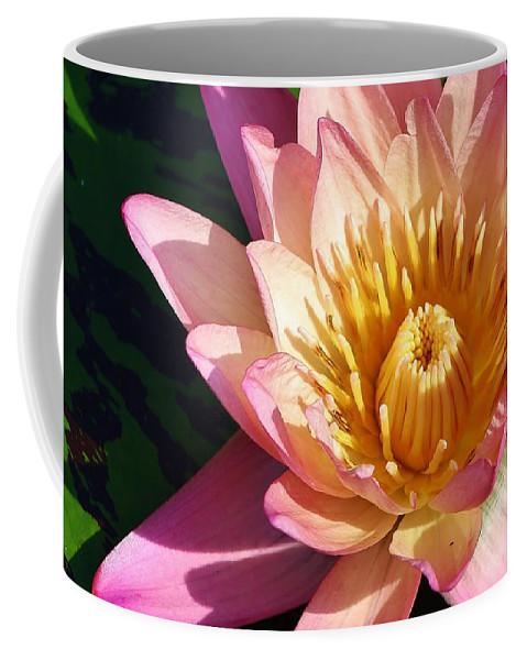 Nature Coffee Mug featuring the photograph Come A Little Closer by Bruce Bley