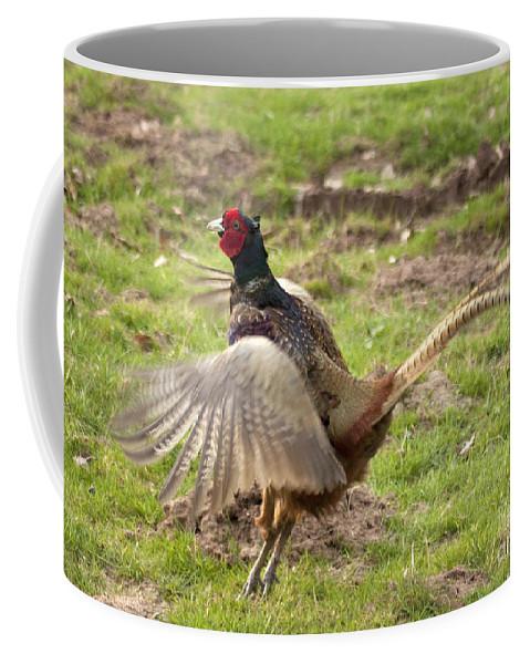 Pheasant Coffee Mug featuring the photograph Crowing by Angel Ciesniarska