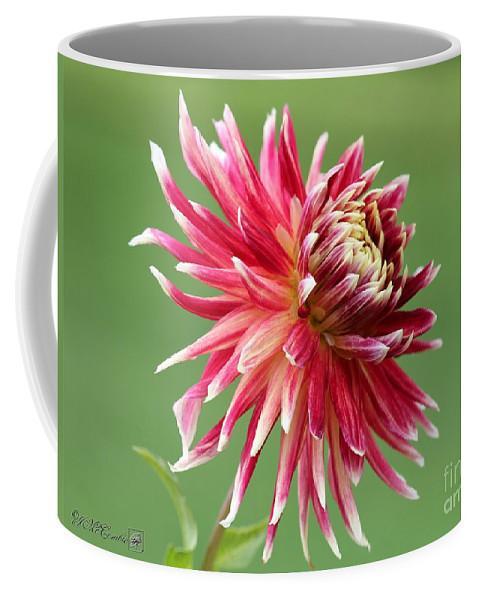 Mccombie Coffee Mug featuring the photograph Dahlia Named Akita by J McCombie