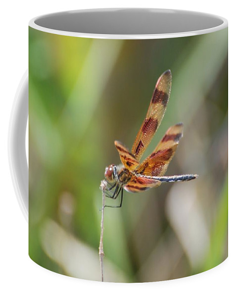 Nature Coffee Mug featuring the photograph Dragon Fly by Rob Hans