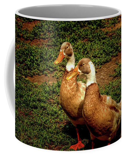 Duck Coffee Mug featuring the photograph 2 Ducks by John Straton