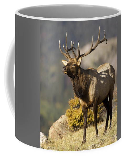 Coffee Mug featuring the photograph Early Morning Bull Elk by Gary Langley