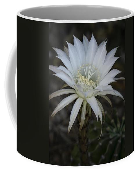 Echinopsis Coffee Mug featuring the photograph Echinopsis by Saija Lehtonen