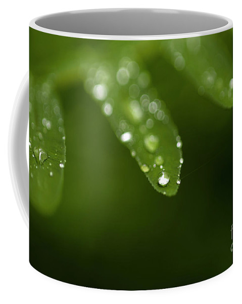 Bellevue Botanical Gardens Coffee Mug featuring the photograph Fern Close-up Of Water Droplets by Jim Corwin