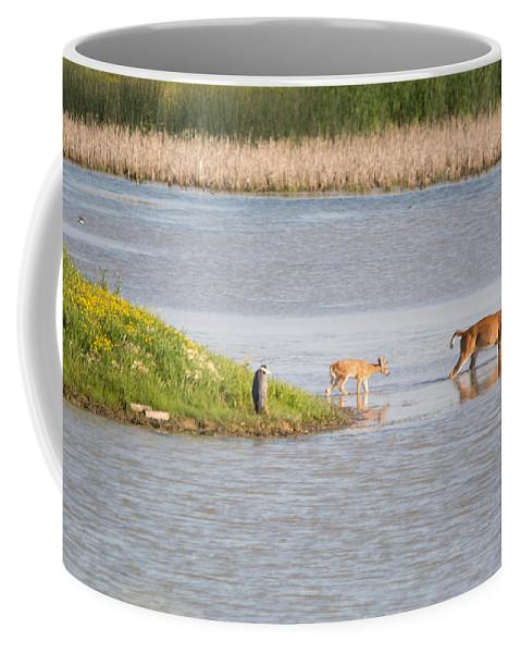 Whitetail Deer Coffee Mug featuring the photograph Follow The Leader by Linda Kerkau