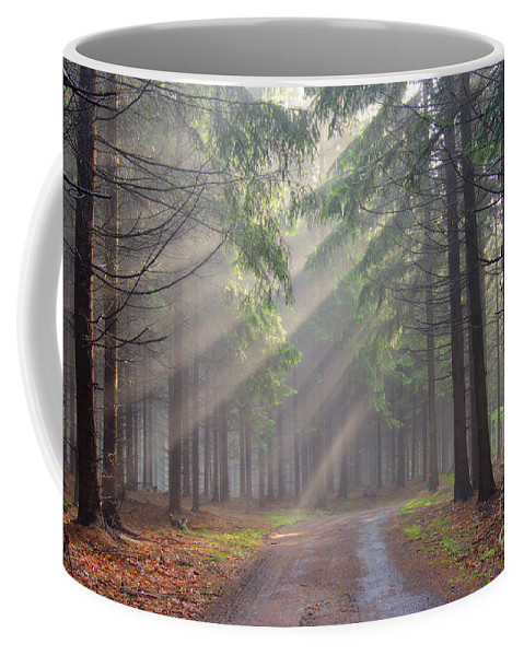 Forest Coffee Mug featuring the photograph God Beams - Coniferous Forest In Fog by Michal Boubin