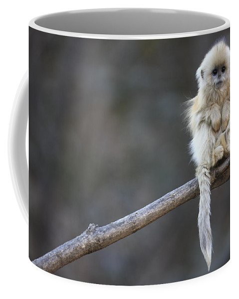 Mp Coffee Mug featuring the photograph Golden Snub-nosed Monkey by Cyril Ruoso