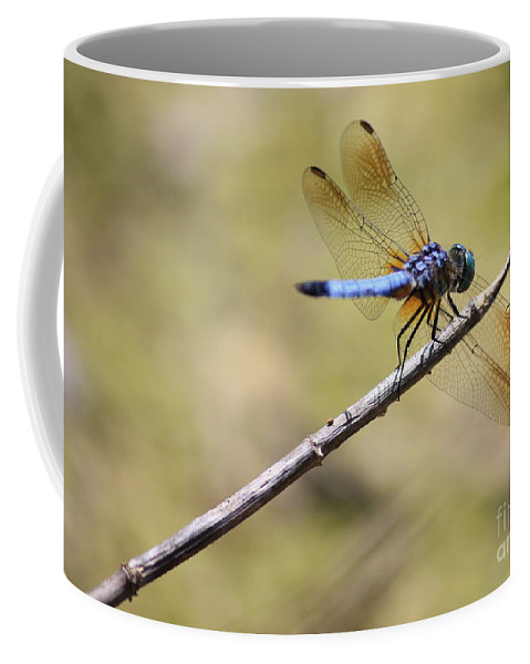 Dragonfly Coffee Mug featuring the photograph Golden Wings by Carol Groenen