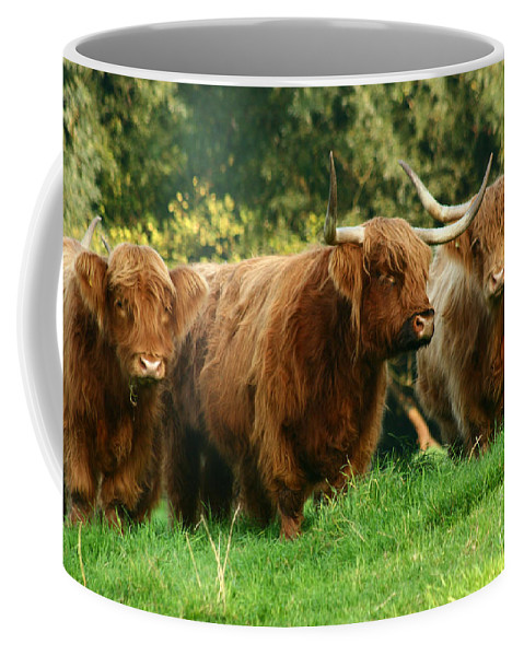 Cow Coffee Mug featuring the photograph Highland Cattle by Angel Ciesniarska