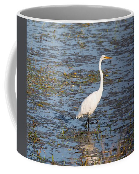 Great Egret Coffee Mug featuring the photograph In The Water by Linda Kerkau
