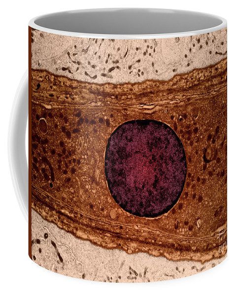 Science Coffee Mug featuring the photograph Leydig Cell, Tem by David M. Phillips