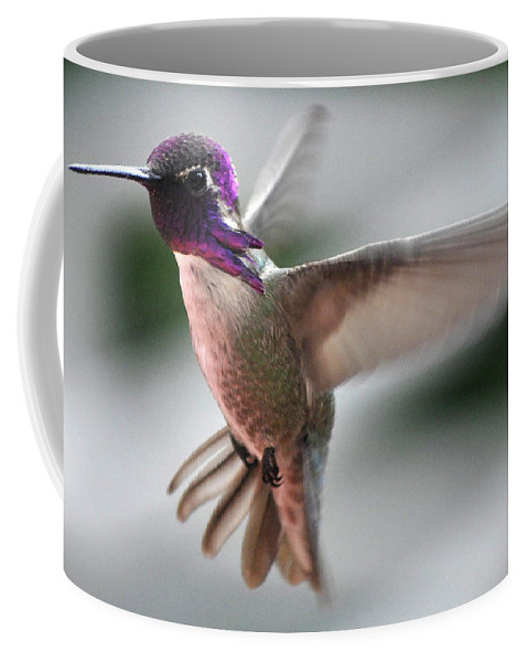Animal Coffee Mug featuring the photograph Male Anna's In Flight by Jay Milo