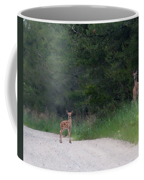 Fawn Coffee Mug featuring the photograph Mom And Baby by David Arment