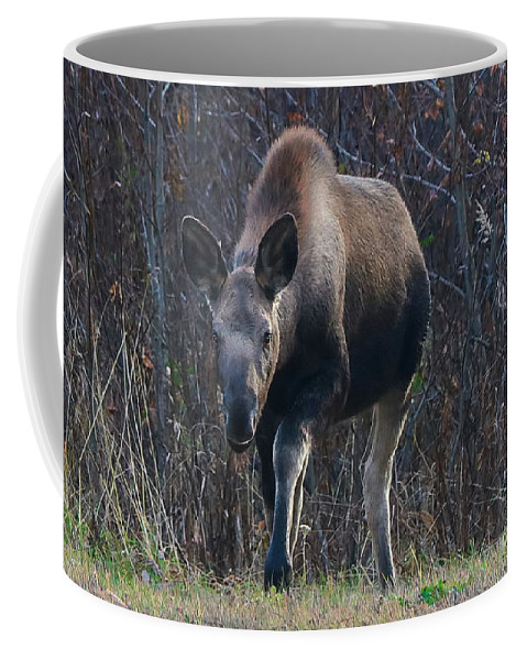 Moose Coffee Mug featuring the photograph Moose by Amber D Hathaway Photography