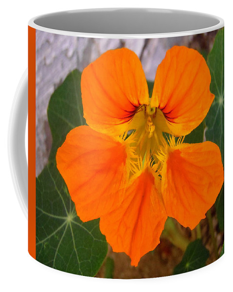 Flower Coffee Mug featuring the photograph Nasturtium by Stephanie Moore
