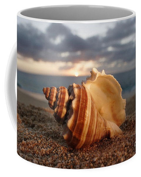 Background Coffee Mug featuring the photograph North Shore Seashell by Vince Cavataio - Printscapes