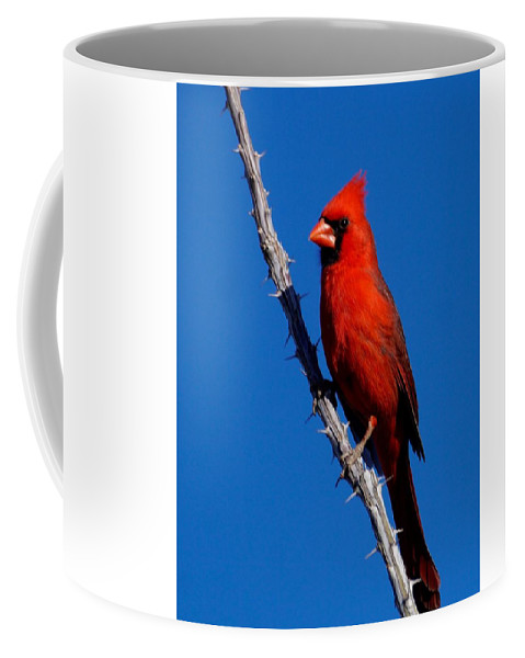 Birds Of North America Coffee Mug featuring the photograph Northern Cardinal by Dennis Boyd
