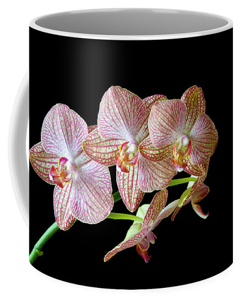 Orchids Coffee Mug featuring the photograph Orchid Phalaenopsis Flower by Michalakis Ppalis