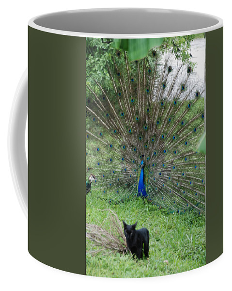 Animals Coffee Mug featuring the photograph 2 Peacocks And A Black Pussy Cat by Rob Hans