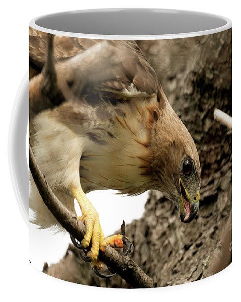 Red Tailed Hawk Coffee Mug featuring the photograph Red Tailed Hawk by Sam Rino