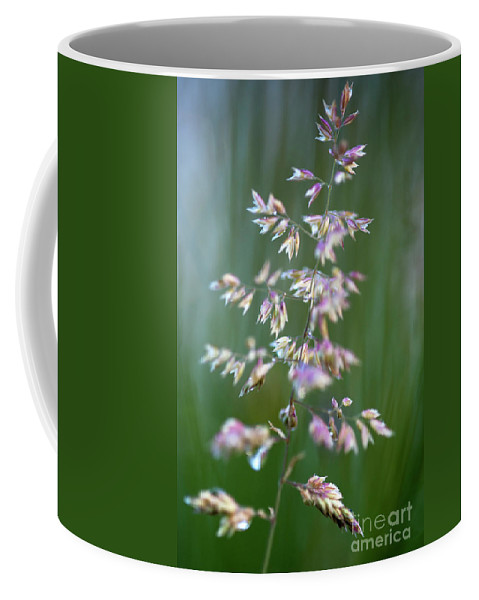 Forest Setting Coffee Mug featuring the photograph Tall Grass Stem Close-up by Jim Corwin