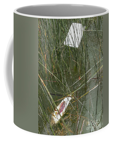 The Lodge At Blue Lakes Coffee Mug featuring the photograph The Lodge At Blue Lakes Decaying Fish by David Oppenheimer
