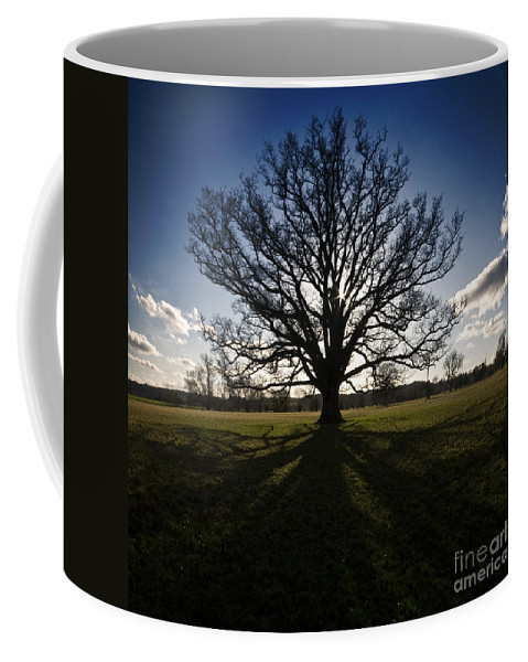 Oak Coffee Mug featuring the photograph The Lonely Tree by Angel Ciesniarska