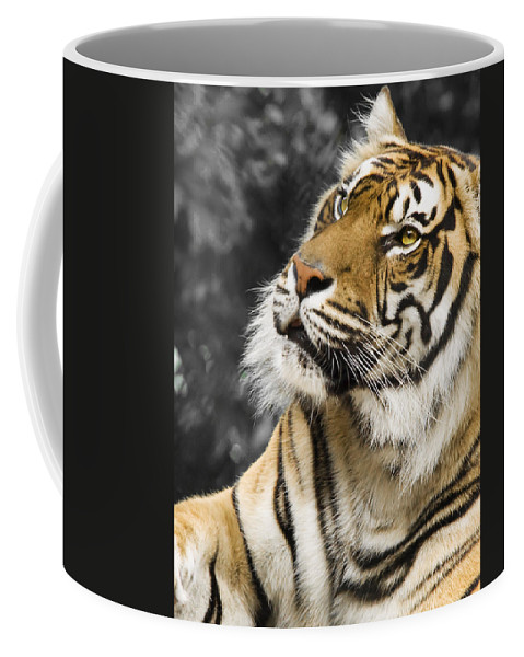 Animal Coffee Mug featuring the photograph Tiger by Svetlana Sewell